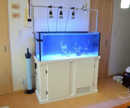 出典:生麦海水魚センター