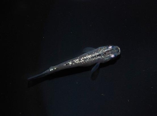 l161008021-118