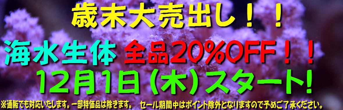 %e6%ad%b3%e6%9c%ab%e5%a4%a7%e5%a3%b2%e5%87%ba%e3%81%97%e3%83%90%e3%83%8a%e3%83%bc