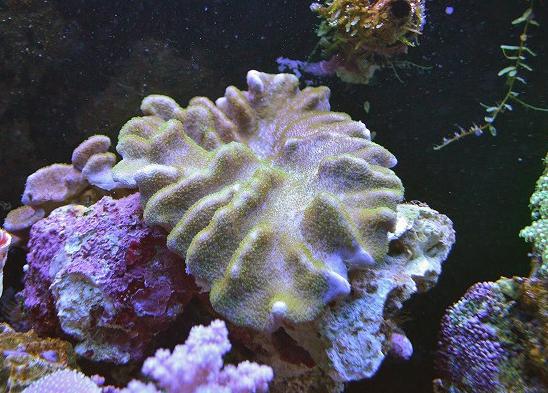 m-1703DSC_0315